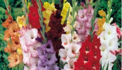 гороскоп цветов в ноябре