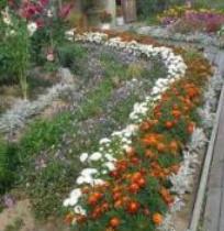 Бордюр из цветов на даче