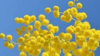 Гороскоп цветов