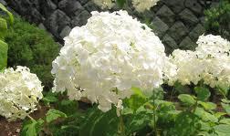 гороскоп цветов на апрель