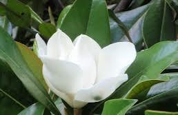 гороскоп цветов в апреле