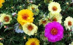 Гороскоп цветов в мае