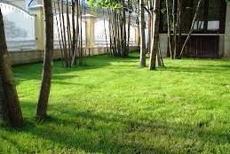 газонная трава - посадка
