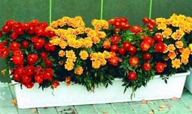 Цветы в горшках названия и фото на улице