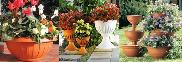 Цветы в горшках названия и фото