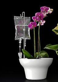 полив цветов из капельниц