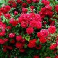 Цветы в офисе — как выбрать правильно