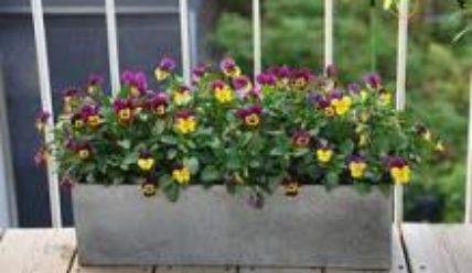 Цветы на балконе фото и названия