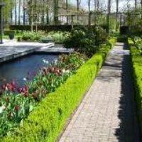 Бордюр садовый из растений