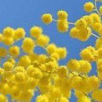 Цветочный гороскоп  в феврале