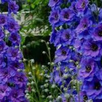 Многолетние цветы в саду