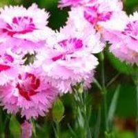 Гороскоп цветов в сентябре