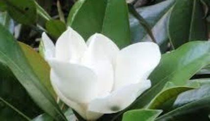 Цветы для женщины всегда желанны