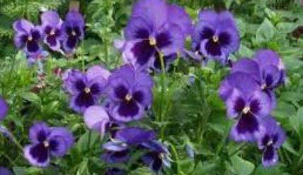 Гороскоп цветов в июле