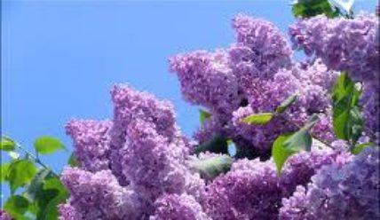 Гороскоп цветов в октябре