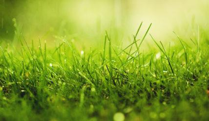 Свойства целебных растений, трав и цветов