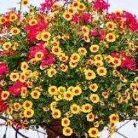 Почва для цветов: способы улучшения.