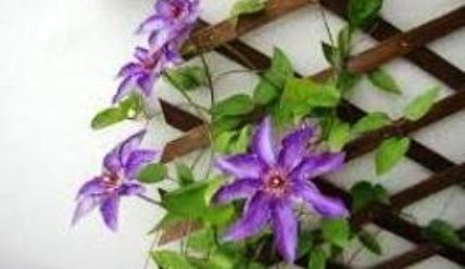 Шпалеры для цветов на дачном участке