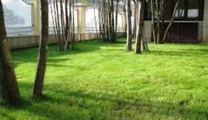 Газонная трава — посадка осенью на даче