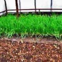 Выращивание лука в теплице зимой как бизнес