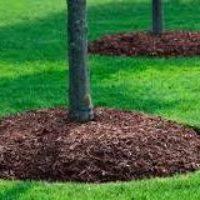 Сосновая мульча, мульча из опилок, коры и щепы — это средства защиты почвы