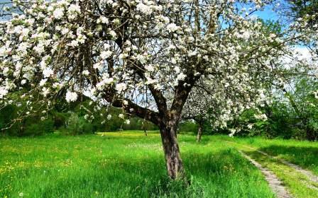продолжительность жизни деревьев окружающий мир
