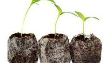 Торфяные таблетки для рассады как пользоваться петунии