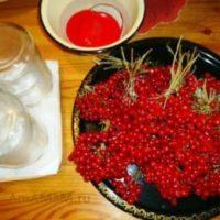 Ягода калина лечебные свойства и противопоказания