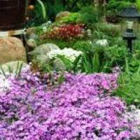 Почвопокровные растения, цветущие все лето